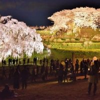 〇三春の滝桜、ライトアップ    2017. 4. 22.(土)晴れ
