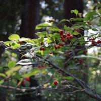 秋の森の赤