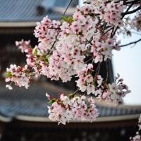 【4/14-4/16】第154回東日本大震災宮城県石巻市十八成浜ボランティア活動報告