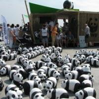 パンダの大量発生!