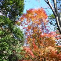 筑波山・四季の道の紅葉を巡る