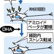 DHAがアルツハイマー抑制