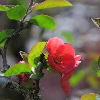木瓜の花咲いて~光のなかに~