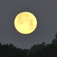 美美しい十五夜の月