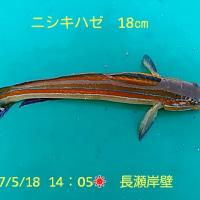 笑転爺の釣行記 5月18日☀ 浦賀・長瀬