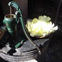 井戸と白菜 GR
