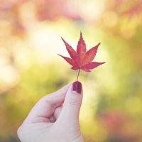 多治見の秋色