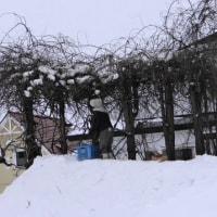-13.1度  下屋の雪落ちた