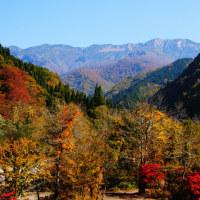 白山 ブナ原生林の紅葉はそろそろ終わり?