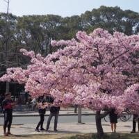 春分の日の長居公園&長居植物園 2 (大阪市)