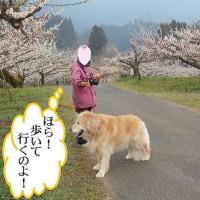 僕も梅を植えてハワイへ行こうかなぁ~!