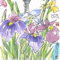 6月7日 スケッチ会 堀切菖蒲園