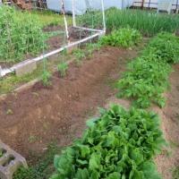 4月の家庭菜園 夏野菜 8年目