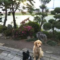 水田鏡の朝日