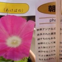 5/25 夏の花の苗を買いました