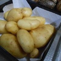 新春の芋掘りしたジャガイモは格別にうまい!