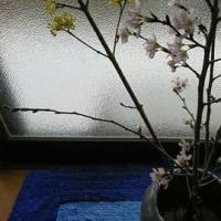 さくらが咲いた!