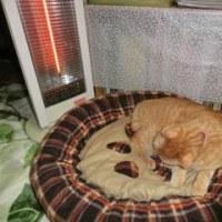 猫ベッド争奪戦