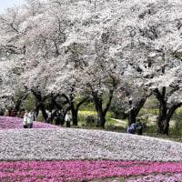 四月快晴の日和
