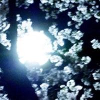 夜桜バージョン