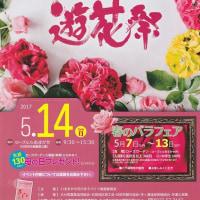 遊花祭・春のバラフェア・ローズヒルあまがせ  ~2017九州バラ園巡り~ その1