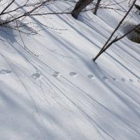 3月18日(土)スノーシューで自然散歩~手稲山周辺~の様子