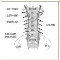 脊椎・頚椎・神経損傷に糖鎖