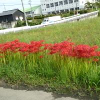 今日の風景 ~ autumn 編