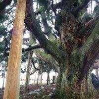 そして今日も「樹」さんに出会う