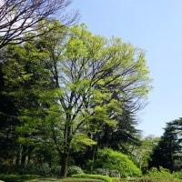 神代植物公園が新緑の息吹きに拍車がかかってきました