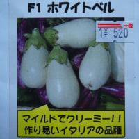 「白ナス F1 ホワイトベル」を蒔種