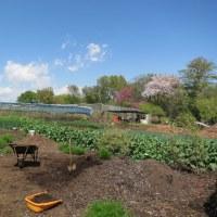 夏野菜の準備・畑の作業
