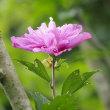 夏の花咲く里山散策