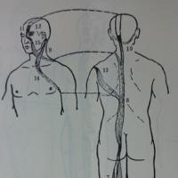 躓かない歩き方:足の太陽経筋 第五節