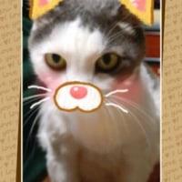 動物顔アプリ