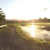 ジョギング 6/3  夕方、カラッとした涼しさの中、走りました。