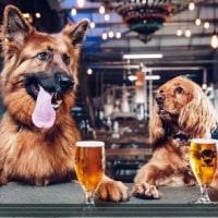 プレミアムフライデーより犬休を@ブリュ―ドッグBREWDOG