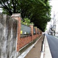2017・5・28 雨の日のおばさんぽ 東京大学総合研究博物館小石川分館は建築ミュージアム(^^♪