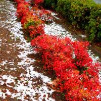 11月の雪と紅葉撮り in 上野の森