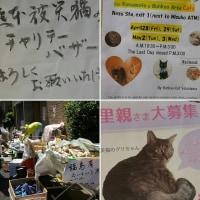 地域猫のためのチャリティーバザーご報告