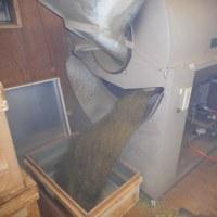 昨日のバーナーの掃除で、焙煎機は快調!夕方からの嵐の前に、朝から加賀棒茶の焙煎作業中!