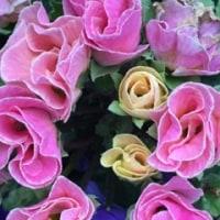 今日の お花                   Today's flower