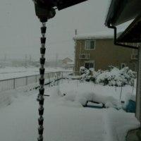 大雪になりました!