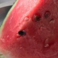 暑い日に食べたい西瓜
