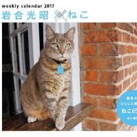 来年のカレンダーも岩合さんの猫