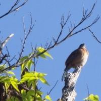 鳥のさえずり。大音量でもリラックスできるのか。