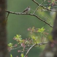 葉桜の中の鳥たち