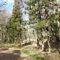 トトロの森。交通事故、産後調整、しつこい肩こり、腰痛なら「立川市のヒロ整骨院」
