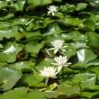 北設楽郡で咲いていた花たち・設楽町~豊根村付近(7月27日)