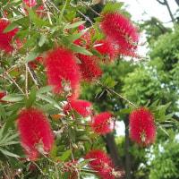 初夏の散歩道に咲く花